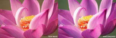 Quick White Balance Correction in Camera Raw & Photoshop