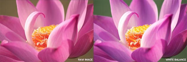 Quick White Balance Correction in Camera Raw & Photoshop